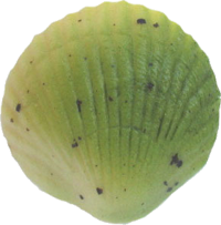 grand-coquille-pate-d-amande